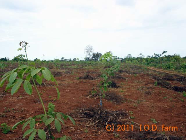 http://kor.iodfarm.com/pic-iod/p20110330-05.jpg