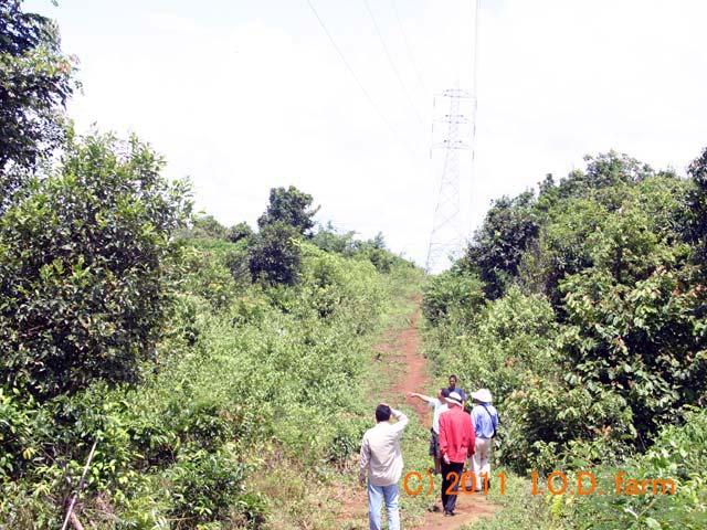 http://kor.iodfarm.com/pic-iod/p20110330-07.jpg